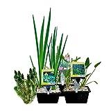 *Wasserpflanzen-Paket für Mini-Teich - 15er Set Wasserpflanzen, winterhart - Für 0,5-1 m³ Wasser - Inklusive Pflanzkorb-Sets - Van der Velde Wasserpflanzen