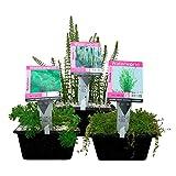 Waterworld Körbe Sauerstoff-Teichpflanzen Paket - 12er Set Wasserpflanzen, Winterhart - für 2 m³ Wasser - Inklusive Pflanzkorb Sets