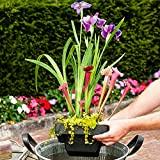 *3 Miniteich Pflanzen | Teichpflanzen winterhart Set | Schwimminsel Teich | Höhe 30-40cm | Topf-Ø 24cm
