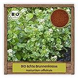 BIO Echte Brunnenkresse Samen (Nasturtium officinale) Kräutersamen Wasserkresse Saatgut