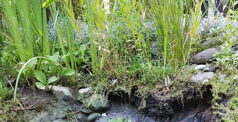 Abgerutschte Uferzone am Teich