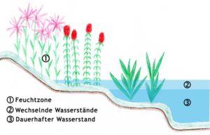 Anordnung der Teichpflanzen in der Uferzone