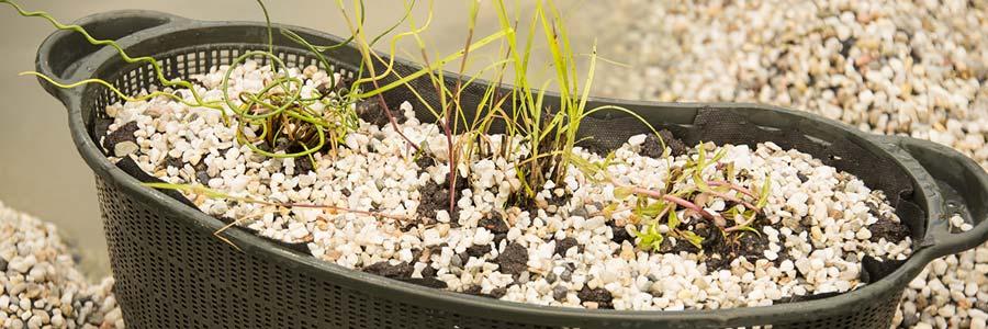 Bodensubstrat im Gartenteich