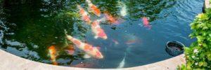 Teicharten - Fischteich