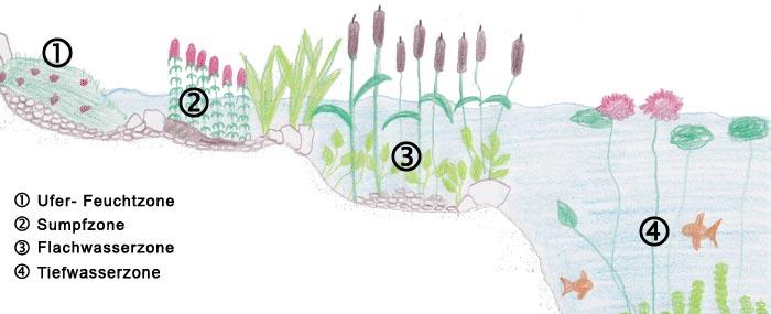 Teichzonen Darstellung