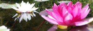 Tiefwasserzone im Gartenteich