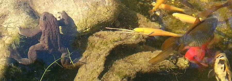 Lebewesen im Teich