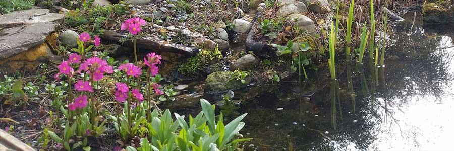 Teichpflege im Frühling