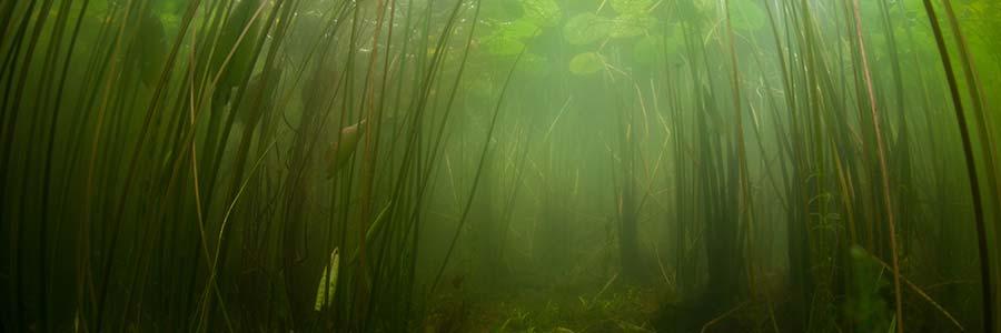 Tiefwasserpflanzen Gartenteich