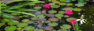pH Wert im Teich senken und erhöhen